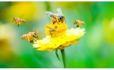 L'importanza delle api per la nostra vita