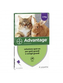 Advantage*4pip 0,8ml Spot-on